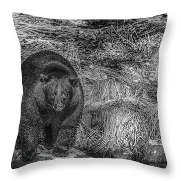 Thornton Creek Black Bear Throw Pillow