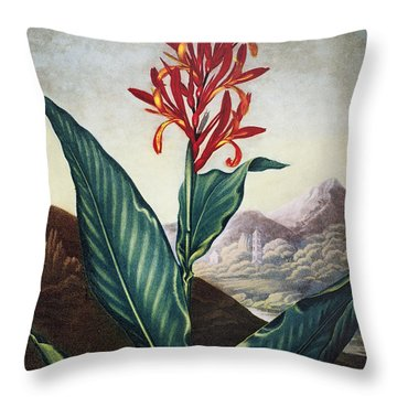 Thornton: Indian Reed Throw Pillow by Granger