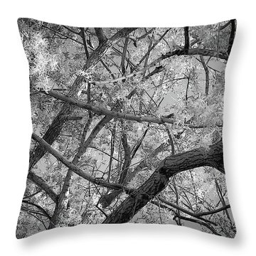 Those Branches -  Throw Pillow
