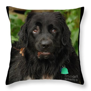 Throw Pillow featuring the photograph Those Eyes by Debbie Stahre