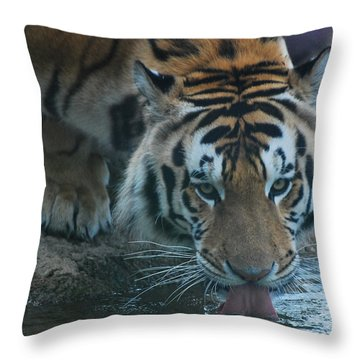 Throw Pillow featuring the photograph Those Eyes by Maggy Marsh