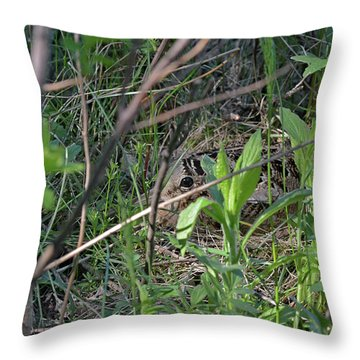 Those Velvet Eyes That Betray Its Camouflage Of The Nesting Woodcock Throw Pillow