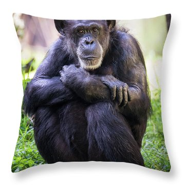 Thoughtful Chimpanzee  Throw Pillow by Stephanie Hayes