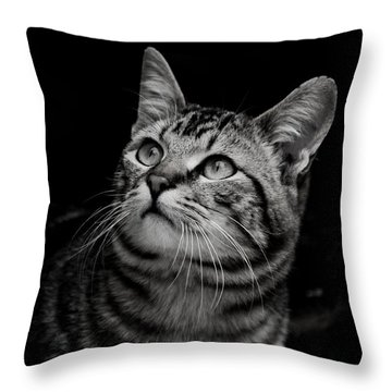 Throw Pillow featuring the photograph Thoughtful Tabby by Chriss Pagani