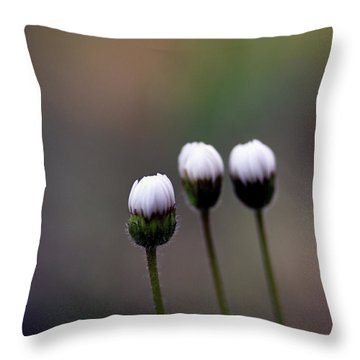 Three Buds Sprawling Daisy Throw Pillow
