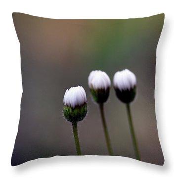 Three Buds Sprawling Daisy Throw Pillow
