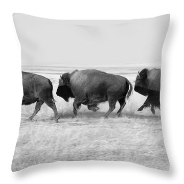Three Buffalo In Black And White Throw Pillow by Todd Klassy