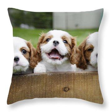 Cocker Spaniel Throw Pillows