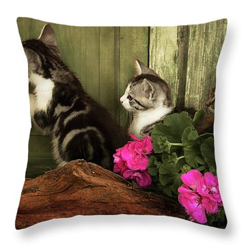 Three Cute Kittens Waiting At The Door Throw Pillow
