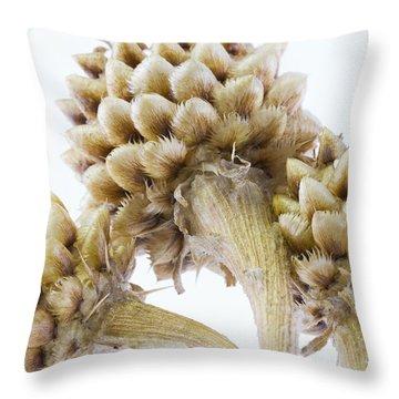 Three Globe Cornflower Seed Heads - Macro Throw Pillow by Sandra Foster