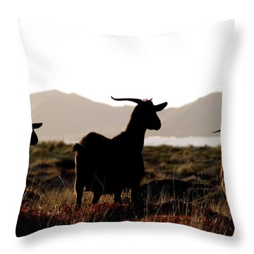 Throw Pillow featuring the photograph Three Goats by Pedro Cardona