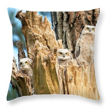 Three Great Horned Owl Babies Throw Pillow