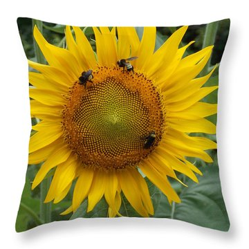 Throw Pillow featuring the photograph Three Is A Crowd by Virginia Coyle