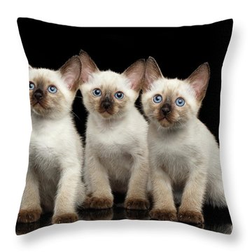 Three Kitty Of Breed Mekong Bobtail On Black Background Throw Pillow