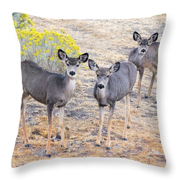 Throw Pillow featuring the photograph Three Mule Deer In High Desert by Frank Wilson