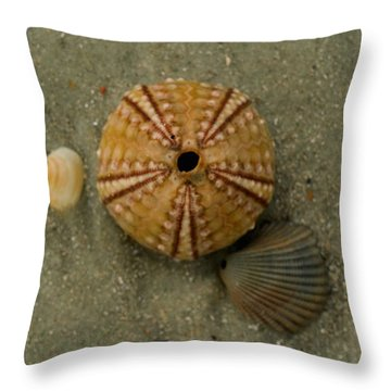Three Shell Study Throw Pillow