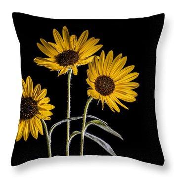 Three Sunflowers Light Painted On Black Throw Pillow by Vishwanath Bhat