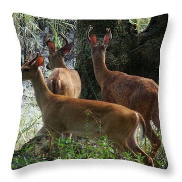 Three Young Bucks Throw Pillow