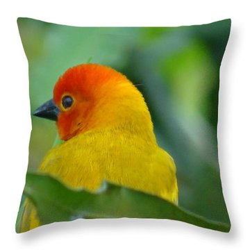 Through A Child's Eyes - Close Up Yellow And Orange Bird 2 Throw Pillow
