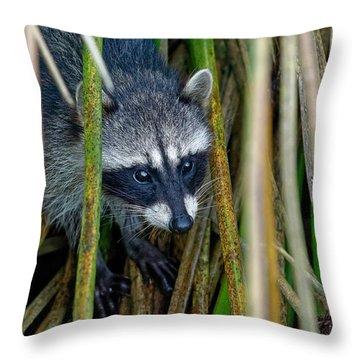 Through The Reeds - Raccoon Throw Pillow