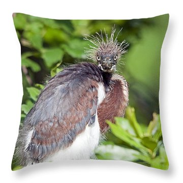 Ticked Off Throw Pillow by Kenneth Albin