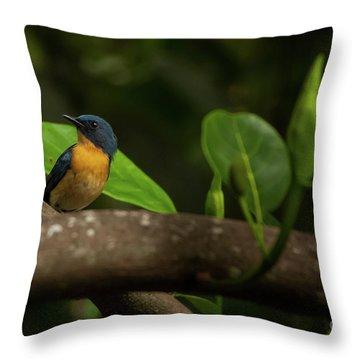 Tickell's Blue Flycatcher Throw Pillow by Venura Herath
