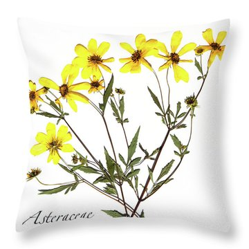 Tickseed Sunflower Throw Pillow