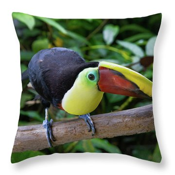 Throw Pillow featuring the photograph Tico Toucan by Arthur Dodd