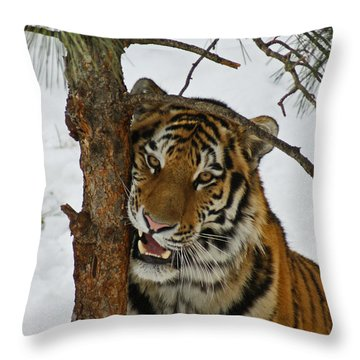Tiger 3 Throw Pillow by Ernie Echols