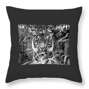 Tiger B/w Throw Pillow