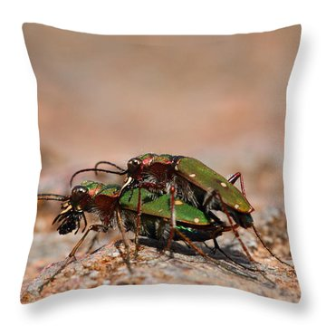 Throw Pillow featuring the photograph Tiger Beetle by Richard Patmore