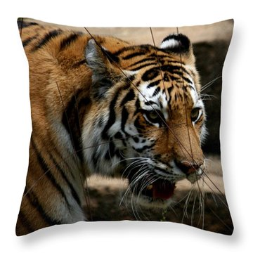 Serching Throw Pillow