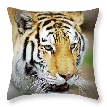 Tiger Eyes Throw Pillow by Michael Peychich