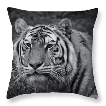 Tiger In The Grass Throw Pillow by Darcy Michaelchuk