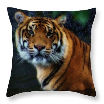 Tiger Land Throw Pillow