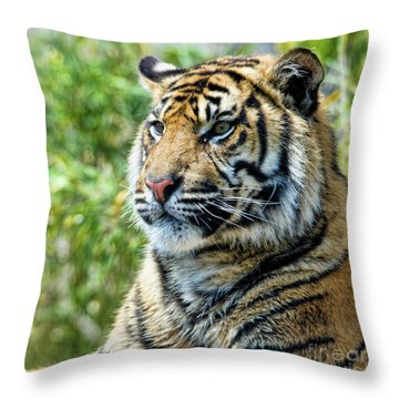 Tiger On Guard Throw Pillow by Steev Stamford