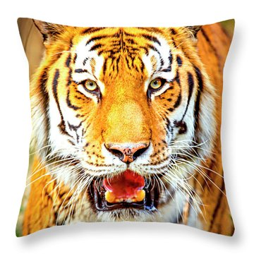 Tiger On The Hunt Throw Pillow