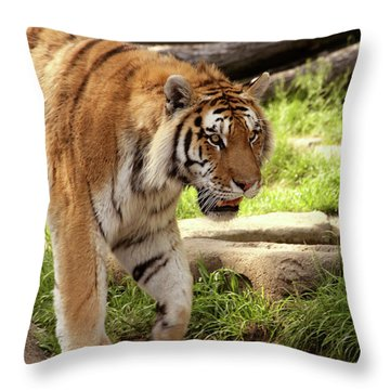 Tiger On The Hunt Throw Pillow by Gordon Dean II