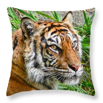Tiger Portrait Throw Pillow by Jennie Marie Schell