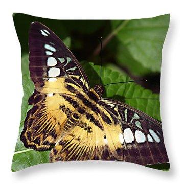 Tiger Print --- Clipper Butterfly Throw Pillow