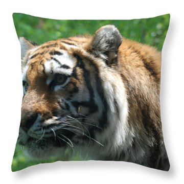 Throw Pillow featuring the photograph Tiger Profile by Richard Bryce and Family