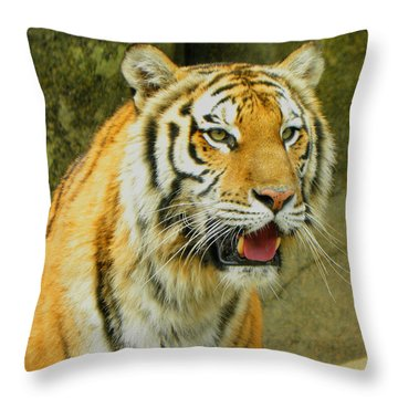 Throw Pillow featuring the photograph Tiger Stare by Sandi OReilly