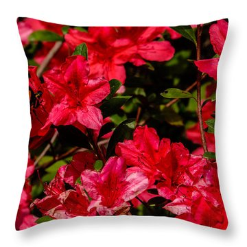 Tiger Swallowtail On A Red Azalea Throw Pillow