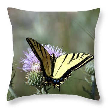 Tiger Swallowtail On Thistle 1 Throw Pillow by George Jones