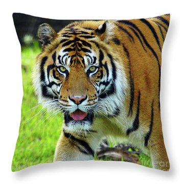 Tiger The Stare Throw Pillow
