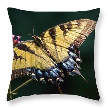 Throw Pillow featuring the photograph Tigress And Verbena by Byron Varvarigos