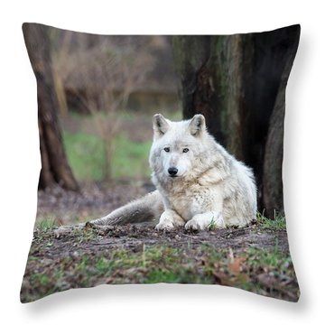 Throw Pillow featuring the photograph Timber Wolf by Andrea Silies