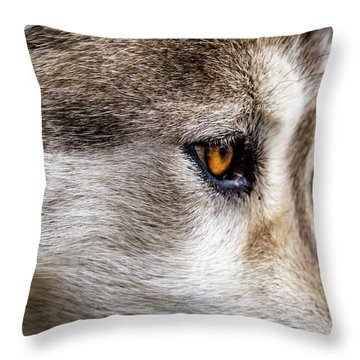 Throw Pillow featuring the photograph Timber Wolf Stare by Teri Virbickis