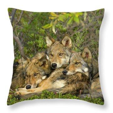 Timber Wolf Trio In Denali Throw Pillow