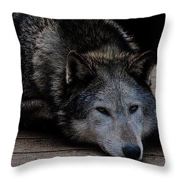 Timber Wolves Throw Pillow